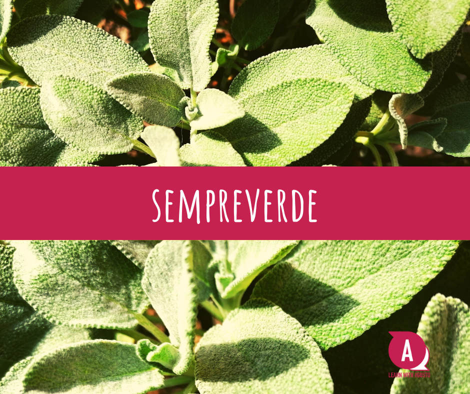 Sempreverde - Learn with Gusto