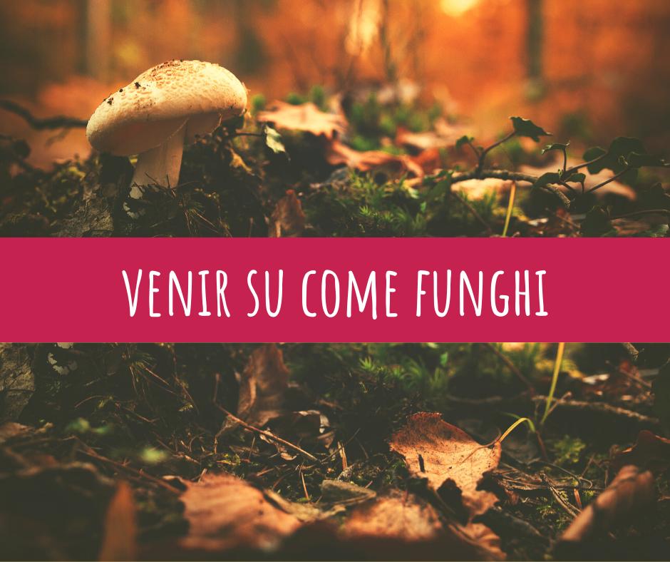 Venir su come funghi